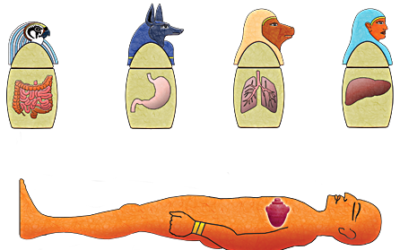 What are the 8 steps of mummification process?
